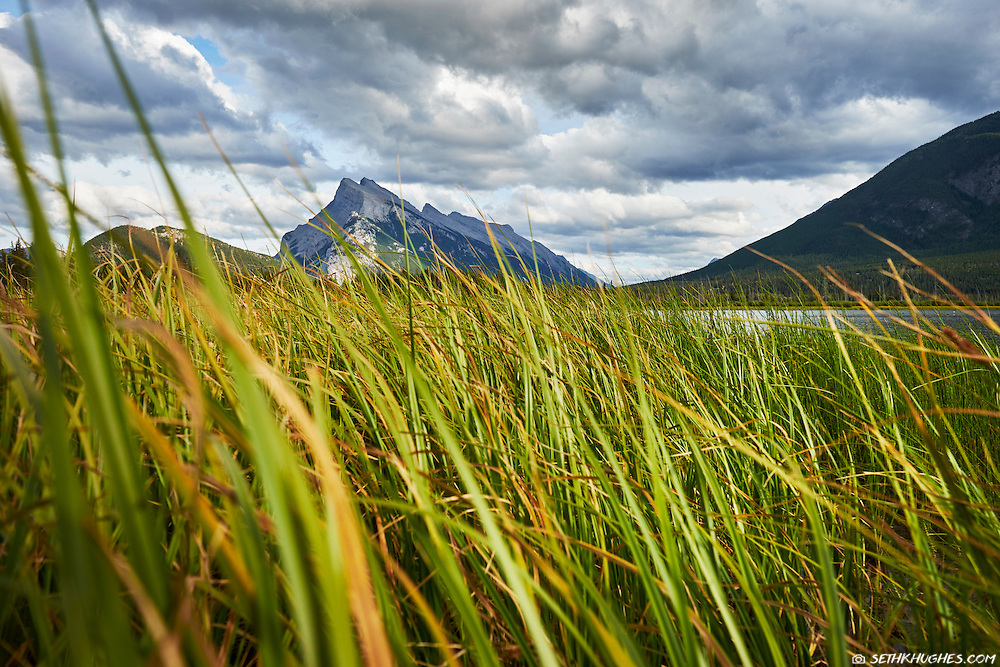 A view of Mount Rundle as seen from the tall grass of Vermilion Lakes in Banff, Alberta, Canada.