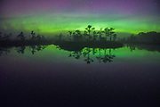 "The curtain of Northern lights dancing over bog pool and a floating island with pine trees, nature reserve ""Niedrāju–Pilkas purvs"", Latvia Ⓒ Davis Ulands 