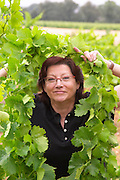 Chantal Lecouty Prieure de St Jean de Bebian. Pezenas region. Languedoc. Vine leaves. Old Grenache grape vine. ex-Owner winemaker. France. Europe. Vineyard.