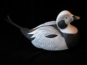 Decorative decoy of a drake long-tailed duck formerly known as an oldsquaw, hand carved from basswood by Lee Suydam.