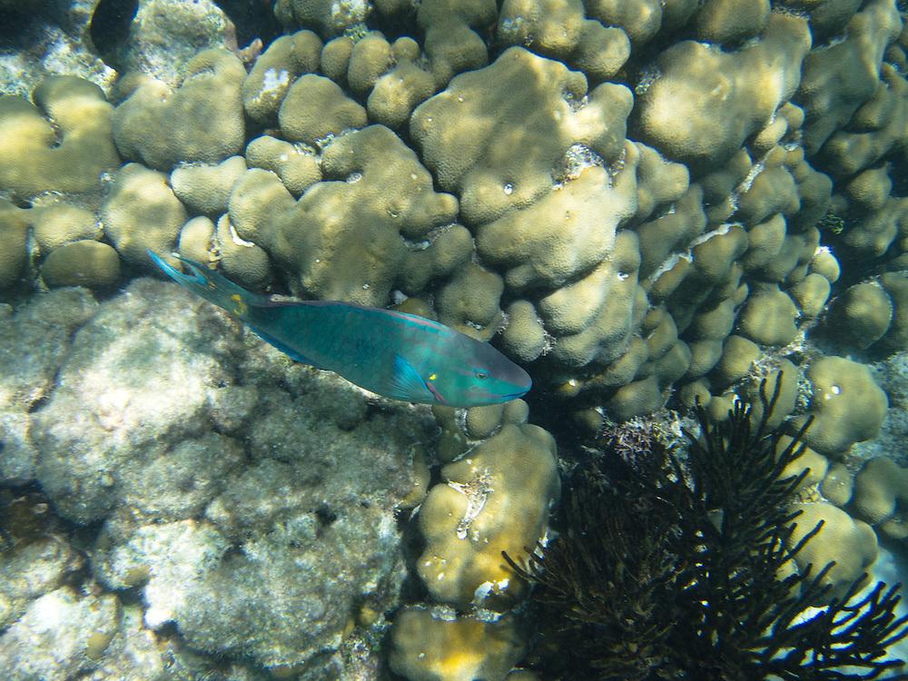 Hol Chan, Belize 8/31/2012.Brightly colored fish at the Hol Chan Marine Reserve..Alex Jones / www.alexjonesphoto.com