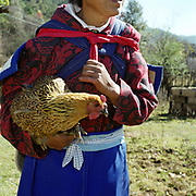 A Naxi ethnic minority woman takes a chicken as a present for a new baby, Wen Hai Xia village, Yunnan Province, China. The People's Republic of China recognises 55 ethnic minority groups in China in addition to the Han majority. The ethnic minorities form 9.44% of mainland China and Taiwan's total population and the greatest number can be found in Yunnan Province, 34% (25 ethnic groups).