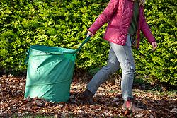 Pulling along leaf collection bag.
