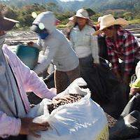 a coffee team at the COMSA coop, Marcala, Honduras