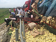BINZHOU, CHINA - AUGUST 25: (CHINA OUT) <br /> <br /> People living in nearby villages loot chicks after a truck carrying tens of thousands of chicks, which are worth 50,000 yuan (7,800 USD), rolled over on Rongcheng-Wuhai Highway on August 25, 2015 in Binzhou, Shandong Province of China. <br /> ©Exclusivepix Media
