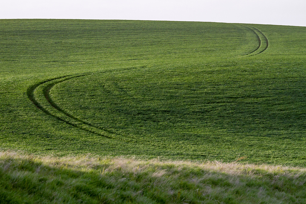 Tractor road track cuts through early green crop growth in an S shaped line. Tractor path through green crops on the Palouse area in Eastern Washington.  Licensing and Open Edition Prints.
