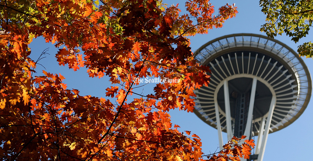 Fall colors are seen with a Space Needle backdrop at Seattle Center. (Ken Lambert / The Seattle Times)