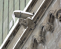 Gargoyles Outside Nidaros Cathedral in Trondheim, Norway. Image taken with a Nikon D2xs and 80-400 mm VR lens (ISO 400, 400 mm, f/5.6, 1/40 sec)
