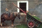SPAIN, NORTH COAST, CANTABRIA a dairy farm and barn near Santillana, west of Santander
