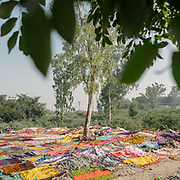 Colorful clothes laid out to dry on the floor below a tree.