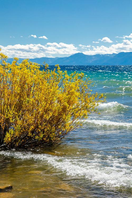 """Kings Beach, Lake Tahoe 1"" - Photograph of fall colors along the shore of a windy and wavy Kings Beach, Lake Tahoe."