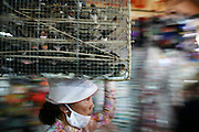 Ho Chi Minh City (Saigon), Vietnam. .March 16th 2007..A woman carries birds in cage inside the Binh Tay Market in Cho Lon, the Chinese quarter of Ho Chi Minh