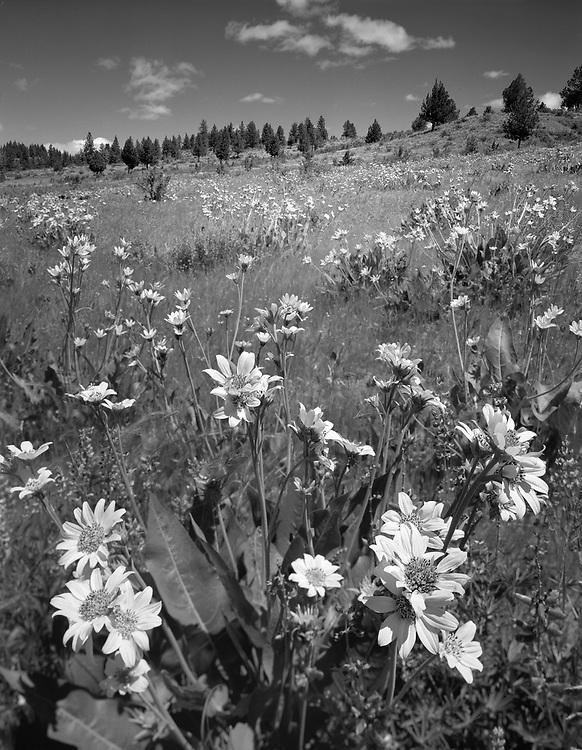 Flowers on Hill, Simnasho, OR