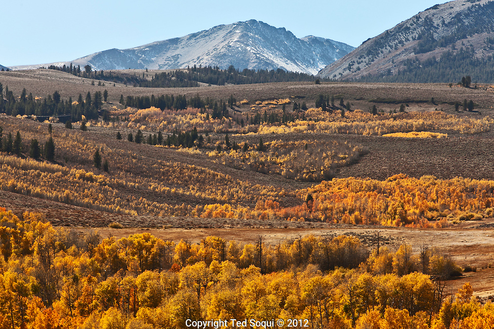 Fall color in valley near Lee Vining..The autumn/fall season in Northern California east of the Sierra Mountain Range. .Thousands of trees are changing colors and producing brilliant and vibrant colors all over the Eastern Sierra valleys.