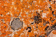 Photo Randy Vanderveen<br /> Jasper National Park, Alberta<br /> 2020-09-23<br /> Lichen on rocks near the Maligne River form an abstract pattern.