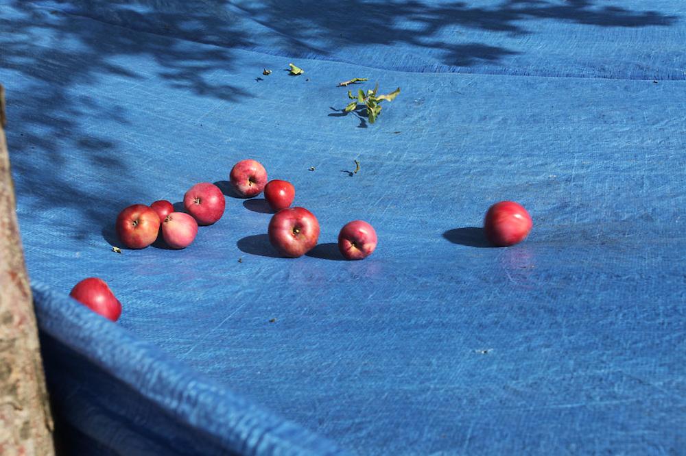 Fruit harvesters