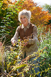 Carol Klein taking seed from <br /> Cerinthe major 'Purpurascens'. Honeywort