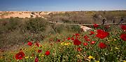 Spring flowers in Habesor Stream. Western Negev, Israel