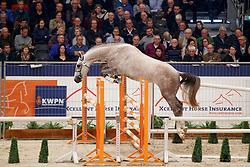 144, Kensington<br /> KWPN Stallionshow - 's Hertogenbosch 2018<br /> © Hippo Foto - Dirk Caremans<br /> 31/01/2018