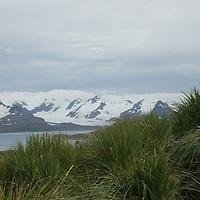Prion Island, Bay of Isles, South Georgia, Antarctica.
