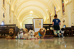 October 4, 2018 - aithful take their pets to church to celebrate Sao Francisco's day in Sao Paulo on October 10, 2018. (Credit Image: © Dario Oliveira/ZUMA Wire)