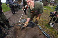 """Joep van de Vlasakker, Wildlife Advisor to Rewilding Europe and the main organiser of the bison transportation, taking away the ear tags from the bison, a strong symbol of them being """"de-named"""" and rewilded!  Transportation of European Bison, or Wisent, from the Avesta Visentpark, in Avesta, Sweden. The animals were then transported to the Armenis area in the Southern Carpathians, Romania. All arranged by Rewilding Europe and WWF Romania, with financial support from The Dutch Postcode Lottery, the  Swedish Postcode Foundation and the Liberty Wildlife Fund."""