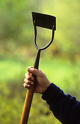 Hand holding a hoe - known as Dutch or push hoe