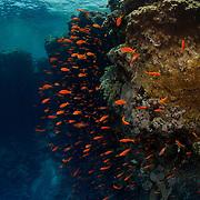 Dive Spot: Abu Kafan