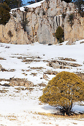 A Mountain Lion's World.  These cougars often live in mule deer habitat.
