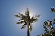 Backlit coconut palm on Namua Island, Western Samoa.