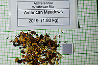 All Perennial Wildflower Mix seeds from American Meadows. Image taken with a Fuji X-H1 camera and 80 mm f/2.8 macro lens + 1.4x teleconverter