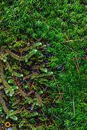 Moss details on a boulder in Glacier National Park, Montana, USA