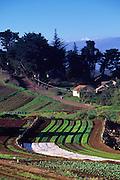 Farm, Kula, Maui, Hawaii<br />