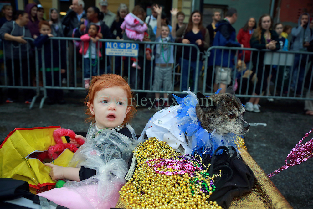 """23 Feb 2014. New Orleans, Louisiana.<br /> Bella Joiner (2 yrs) and dog Maximillian on the wet and soggy streets of the French Quarter at the 22nd Mystic Krewe of Barkus parade, the only officially licensed Mardi Gras krewe by and for canines. This year's parade is themed  """"Dogzilla: Barkus Licks the Crescent City."""" <br /> Photo; Charlie Varley/varleypix.com"""