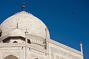 The Taj Mahal mausoleum with birds flying around the dome, southern view detail, Uttar Pradesh, India