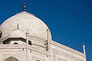 The Taj Mahal mausoleum with birds flying around the dome, southern view detail, Uttar Pradesh, India