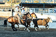 Juan Franco, Jr. and his father Juan Franco, Sr. rope a steer during Terna en el Ruedo at the family Charreria practice session in the Jalisco Highlands town of Capilla de Guadalupe, Mexico. The Franco family has dominated Mexican rodeo for 40-years and has won three national championships, five second places and five third places.