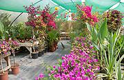 Urban Jungle Plant Nursery and Café, Beccles, Suffolk, England, UK - tropical zone polytunnel