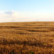 Panorama photography of Kansas wheat fields, part of an assignment for Performance Automotive in Summer 2014.