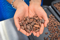 Cocoa beans on display at The Chocolate Show, at Olympia in Kensington, London.  Picture date: Friday October 13th, 2017. Photo credit should read: Matt Crossick/ EMPICS Entertainment.