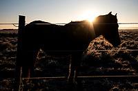 Podlasie, 17.11.2018. Pierwsza w listopadzie mrozna noc na Podlasiu przyniosla o poranku przepiekna szadz N/z koniki polskie na oszrononym pastwisku fot Michal Kosc / AGENCJA WSCHOD