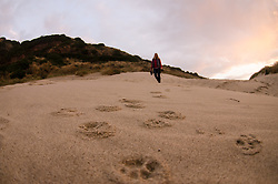 Sandfly Point, Otago Peninsula, Feral Cat Tracks