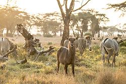 Lewa Conservancy in Northern Kenya. (Photo by Ami Vitale)