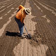 Abraham Perez fixes/tests irrigation tape on an alfalfa field, September 20, 2019, at KLH's Urrea Farm, Arizona.