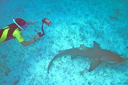 Tim Calver Taking Photos Of Captured Lemon Shark