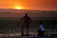 Sunset over giant painted tribute to migrant farm workers, near Salinas, Monterey County, California