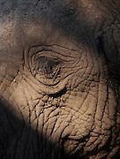 The eye of an African Elephant in the Okavango Delta, Botswana