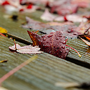 A closeup of a leaf hanging part on and part off the deck.  The raindrops make a nice accent as does the sheen of the wet wood