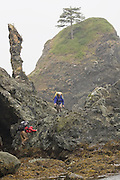 Liana and Parmenter Wely navigate the rugged coastline at Point of the Arches, North Coast, Olympic National Park, Washington.