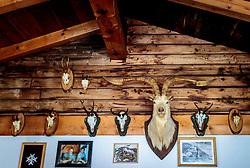 THEMENBILD - Präparierte Tiere. Die bewirtschaftete Alm, wo rund 800 Schafe und 55 Milchkühe im Sommer sind, besteht seit dem Jahre 1779 und wird von der Familie Aberger Dick geführt, Sie liegt unmittelbar bei den Kapruner Hochgebirgsstauseen, aufgenommen am 16. Juni 2017, Fürthermoar Alm, Kaprun, Österreich // . The Fuerthermoar Alm, where around 800 sheep and 55 dairy cows are in summer and is directly next to the Kaprun Hochgebirgsausauseen. The Mountain Hut exists since 1779 and is owned by the family Aberger Dick, taken on 2017/06/16, Kaprun, Austria. EXPA Pictures © 2017, PhotoCredit: EXPA/ JFK